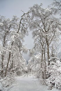 Winterlandschaft by fotoping