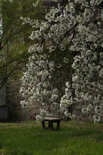 Wolz ́n Garten Ebern by Andrea Meister