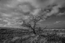 dark tree by Federico C.