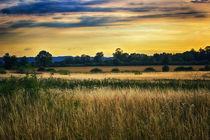 Golden Daze by Vicki Field