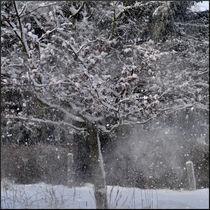 Schneefall by Irmtraut Prien