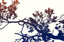 Vogel sitzt im Baum  by Bastian  Kienitz