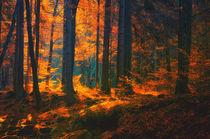 Herbstwald by Heiko Döhrling