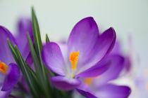 Blumengruß / 26 von Heidi Bollich
