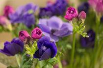 Blumengruß / 21 von Heidi Bollich