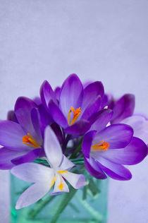 Blumengruß / 25 by Heidi Bollich