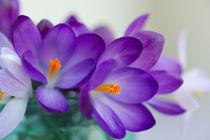 Blumengruß / 24 von Heidi Bollich