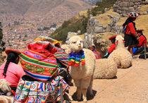 Alpakas in Peru mit Inkafrauen von mellieha