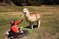 Alpaka in Peru mit Inkafrau von mellieha