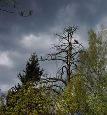 Unflinching tree von Yuri Hope