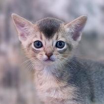Dsc-7199-dot-2-abi-kitten7-01-15