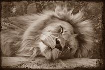 Schlafender Löwe by darlya
