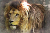Löwe von darlya