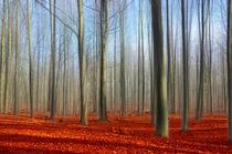 Wald V by Heiko Döhrling