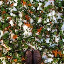 Winter Palette 4 by Rene Steiner