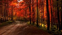 Herbstweg von Heiko Döhrling