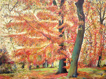 Buchen im Herbst von Renée König