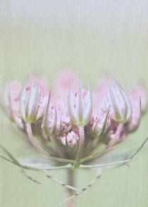 Doldenblütler by Josephine Mayer-Hartmann