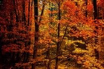 Herbstfarben von Heiko Döhrling