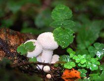 Forest fairy tale von Yuri Hope
