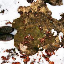 Winter Palette 9 by Rene Steiner