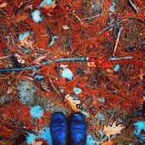 Winter Palette 10 by Rene Steiner