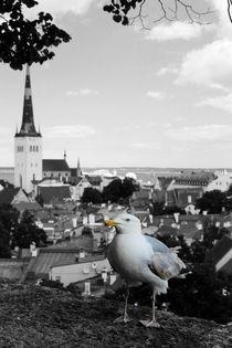 Tallinn von lisebonne