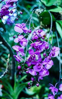 Purple orchids  by Marina Dvinskykh
