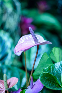 Pink Leaf Flower by Marina Dvinskykh