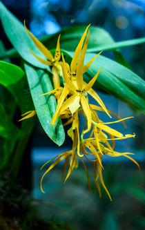 Wild yellow by Marina Dvinskykh