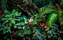 Jungle by Marina Dvinskykh