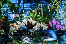 Orchids by Marina Dvinskykh