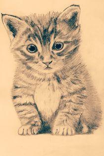 Katzen baby von sigursson