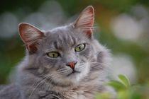 Katzen Blick by sigursson