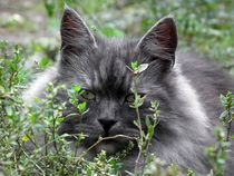 Katzen in der Natur von sigursson