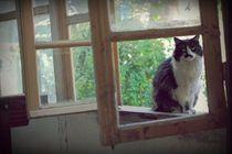 Katzen lieben Fensterbänke by sigursson