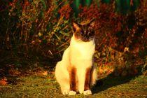 Sunshine Cat von sigursson