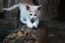 Katzen Baby beim spielen von sigursson