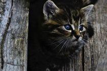 Kleine Katze von sigursson