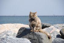 Katze im urlaub von sigursson