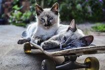 Katzen Geschwister by sigursson