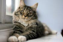 Katzen lieben die Fensterbank von sigursson