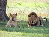 Löwen Duo von sigursson