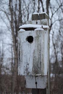 Winter Birdhouse, 2016 von Caitlin McGee