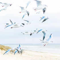 Strand von Ruby Lindholm