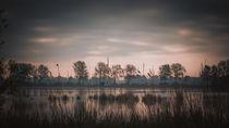 Teich im Morgenlicht by Franziska Mohr
