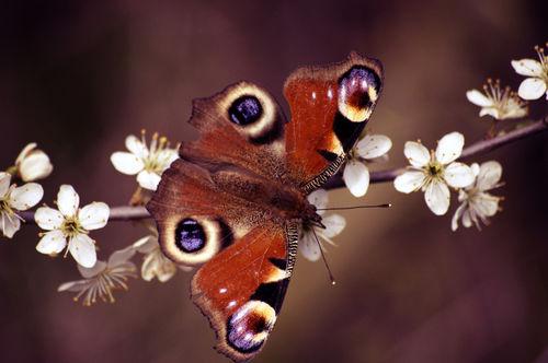 Schmetterling-auf-zweig