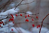 Winter im Englischen Garten... 10 von loewenherz-artwork