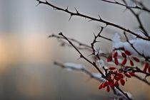 Winter im Englischen Garten... 3 von loewenherz-artwork