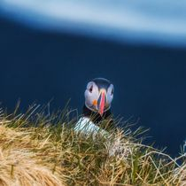 What`s up dude? by daniel-herr